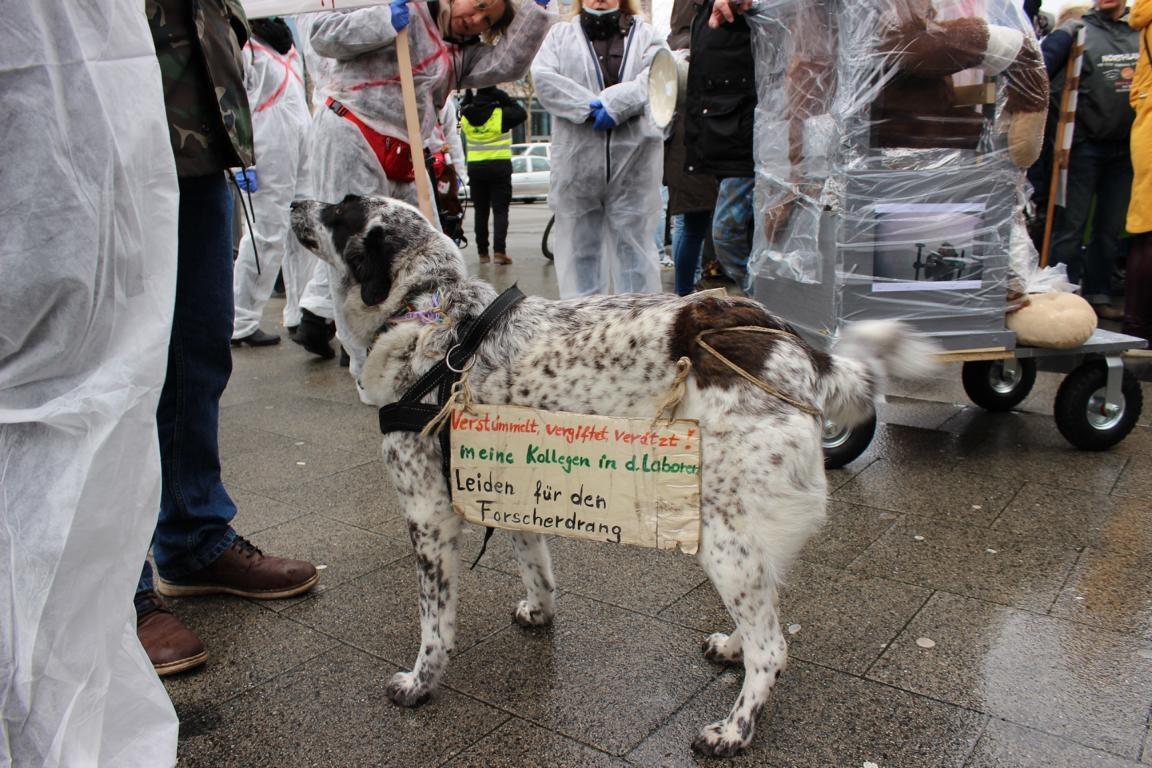 Tierschutzverein Kiel