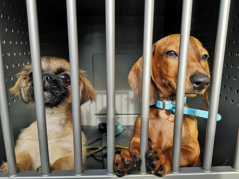 Welpen Vor Strassenverkauf Gerettet Hamburger Tierschutzverein