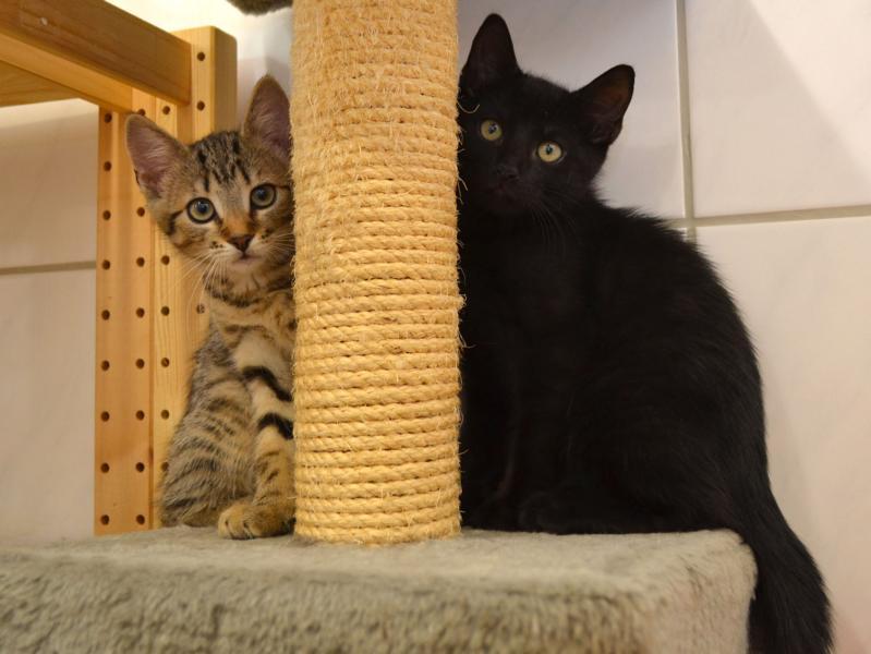unsere katzen brauchen neue kratzb ume hamburger tierschutzverein von 1841 e v. Black Bedroom Furniture Sets. Home Design Ideas